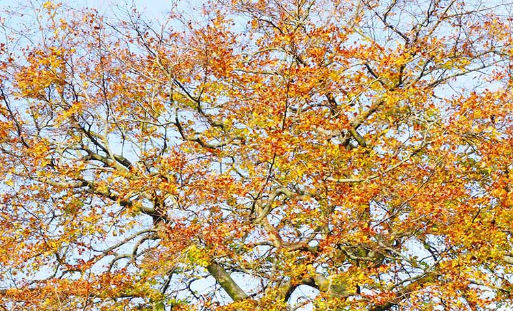 Beech tree blue sky - Seven Style Tricks to Steal from Other Artists