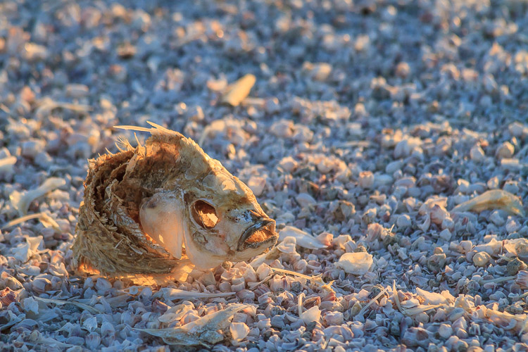 Dead Tilapia at Salton Sea, California by Anne McKinnell - How to Make Storytelling Landscape Photos - 4 Steps