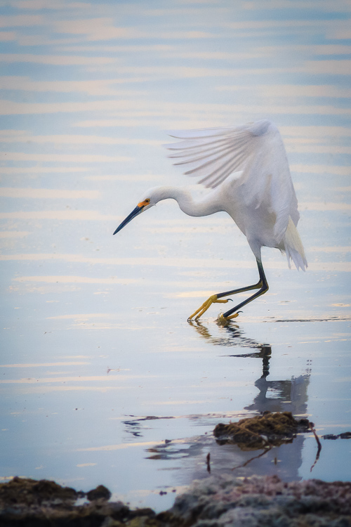 Egret at Salton Sea, California by Anne McKinnell - How to Make Storytelling Landscape Photos - 4 Steps