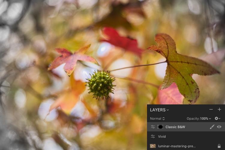 https://i1.wp.com/digital-photography-school.com/wp-content/uploads/2017/11/luminar-mastering-presets-gumball-vivid-bw.jpeg?resize=750%2C500&ssl=1