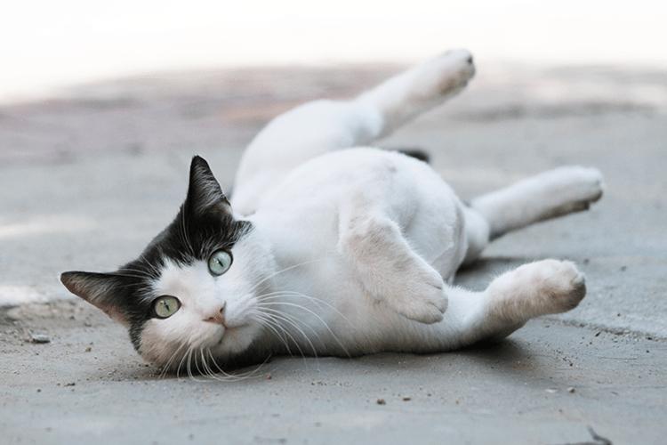 在宠物摄影中与不守规矩的动物一起工作
