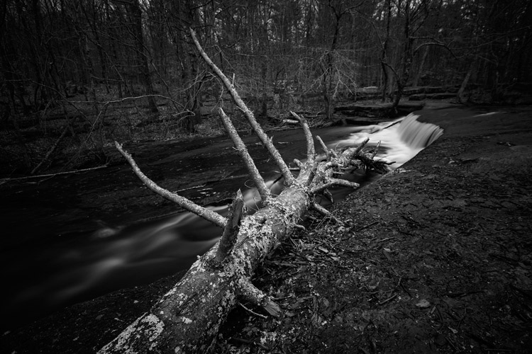 5 Reasons Why You Might Want to Try Black and White Photography
