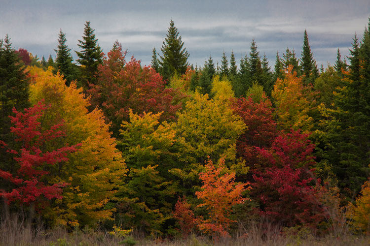 4 Tips for Nature Photography Beginners - fall trees