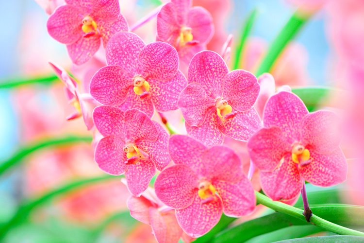 pink orchid flowers - 3 Key Tips for Making More Dynamic Photographs