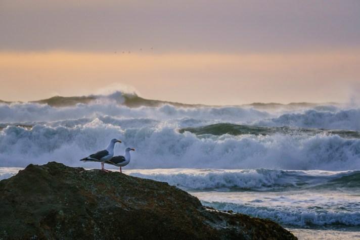 在俄勒冈海岸的大冲浪。风景摄影入门-4个针对初学者的简单提示
