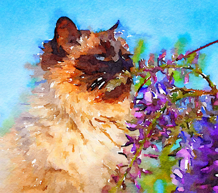 How to Turn Your Photos into Painterly Style Watercolor Art - cat image painterly style