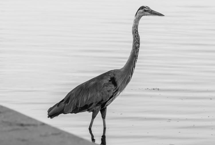 Tips for Doing Nature Photography at Your Local Parks - bird