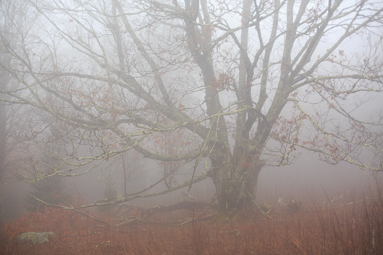 foggy image of a tree - How to Control Mood in Your Foggy Photos