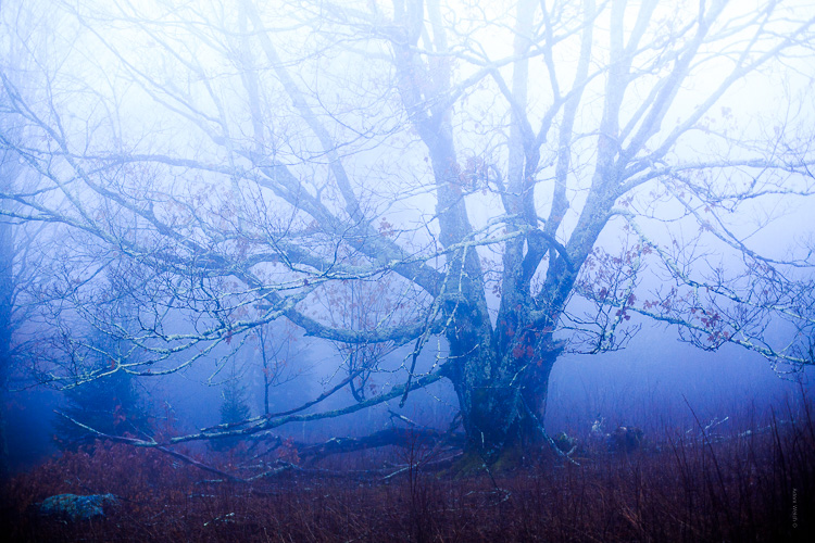 How to Control Mood in Your Foggy Photos - darker