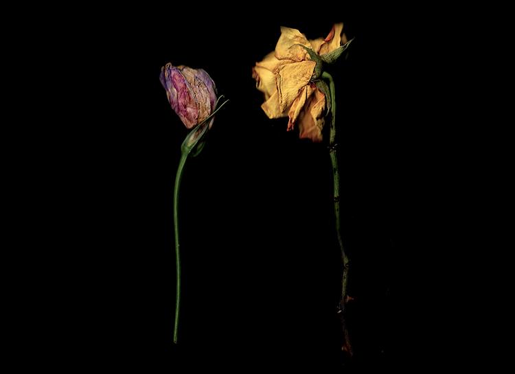 如何使用扫描技术创建植物图像