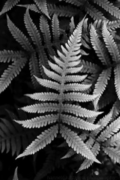 12a_plant-photography-tips.jpg