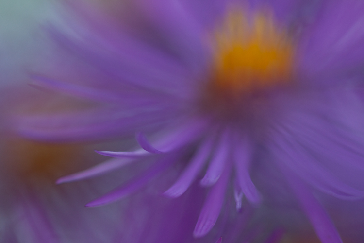 macro photography flower abstract aster - Five Simple Exercises to Improve your Photography