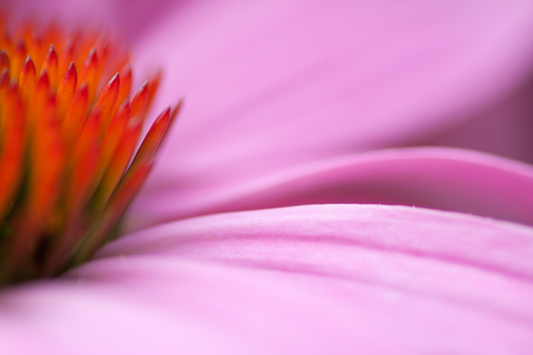 macro photography flower coneflower - Five Simple Exercises to Improve your Photography