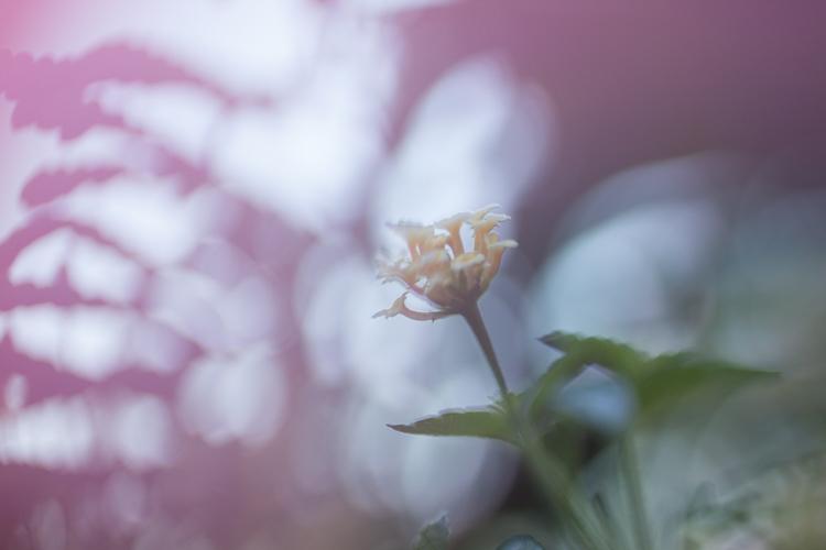 freelensing flowers macro photography