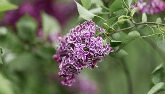 Karthika Gupta Photography - Memorable Jaunts DPS Article 6 ways to photograph spring-2
