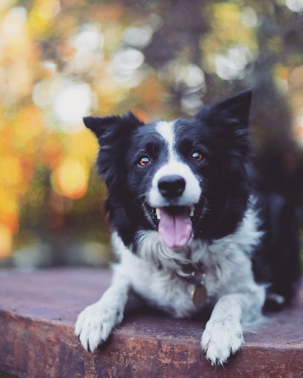 Review of the Tiffen Variable Neutral Density Filter - happy border collie
