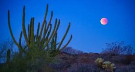 Blue, blood, super moon in Ajo, Arizona, by Anne McKinnell