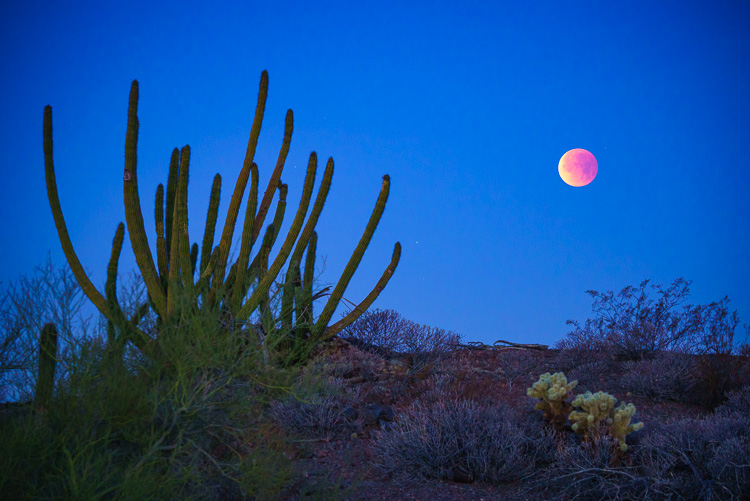 Blue, blood, super moon in Ajo, Arizona, 3 Techniques and Tips for Photographing the Moon in the Landscape