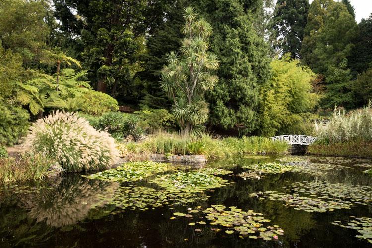 Composition Checklist for Beginners - green garden image