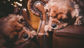 Weekly Photography Challenge – Dogs and Puppies