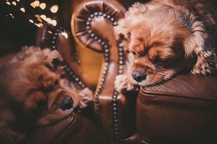 Dog reflection hack - 10 Amazing Camera Hacks for Dog Photography