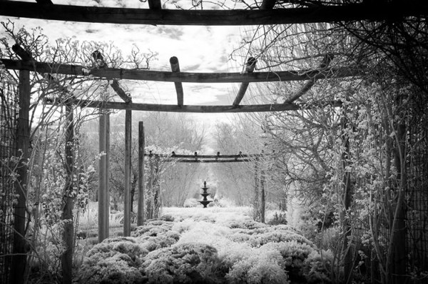 Tips for Converting an Old Camera for Shooting Infrared Photography