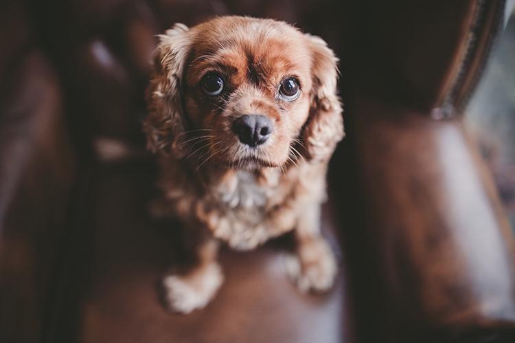 Photo with window light - 10 Amazing Camera Hacks for Dog Photography