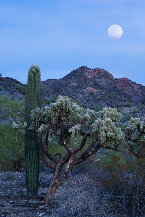 Super Moon in Ajo, Arizona by Anne McKinnell