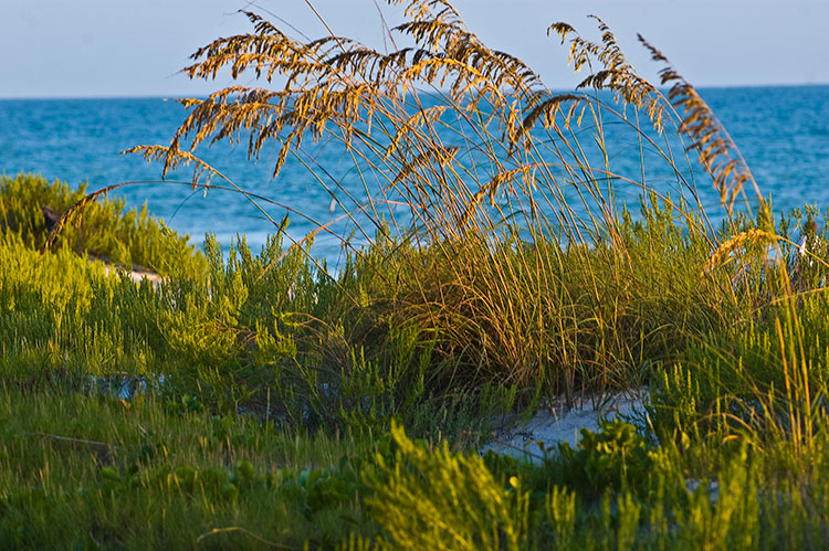 Longboat Seaoats - Your Camera Sees Differently Than Your Eyes
