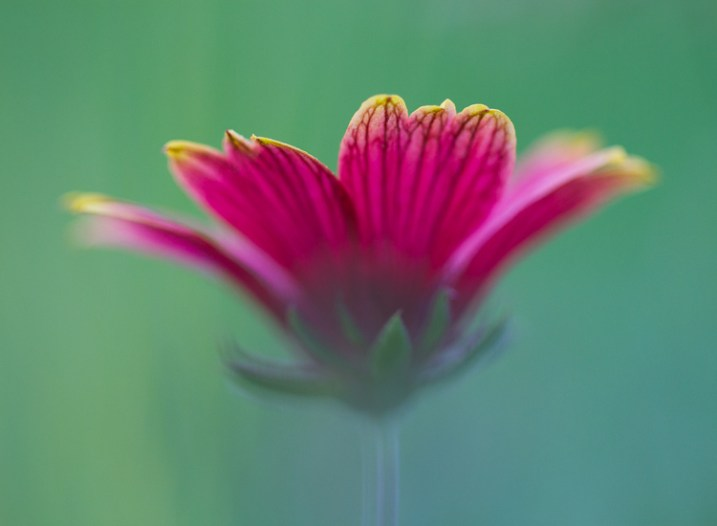 Flower Abstract Macro Photography