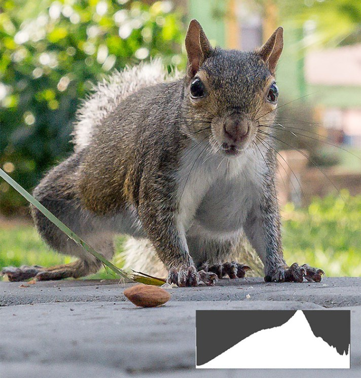 Squirrel RAW Interpreter - Your Camera Sees Differently Than Your Eyes