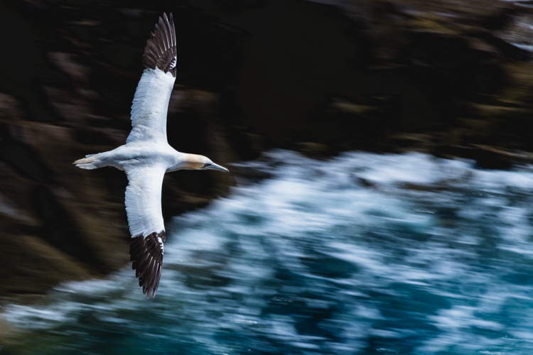 Birds in flight - wildlife photographer