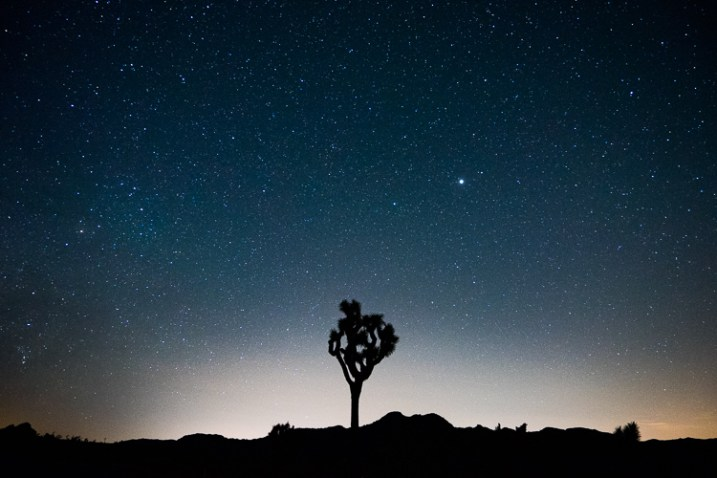silhouette of a tree and the night sky - 12 Good Reasons Why You Should Start a Photography Blog