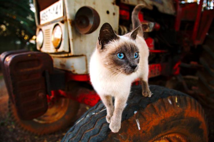 如何在摄影中使用概念对比 - 在轮胎上的猫