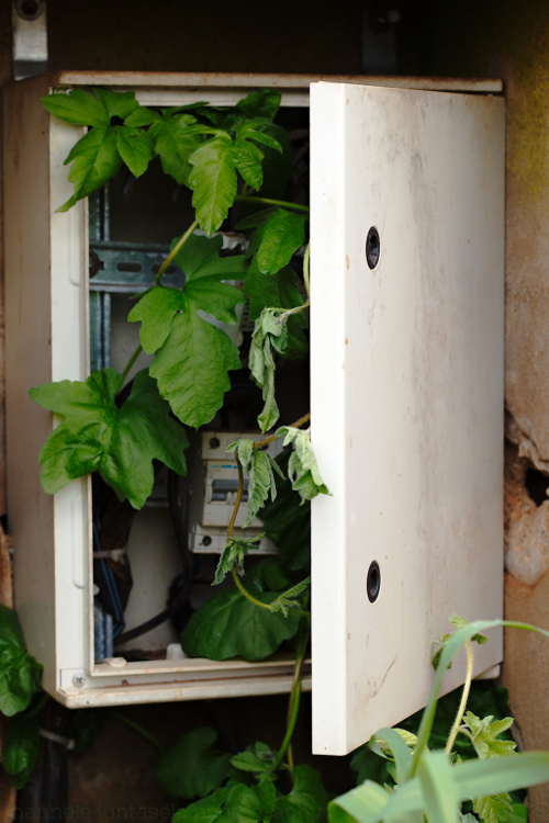 How to Use Conceptual Contrast in Photography - plant in an electrical box