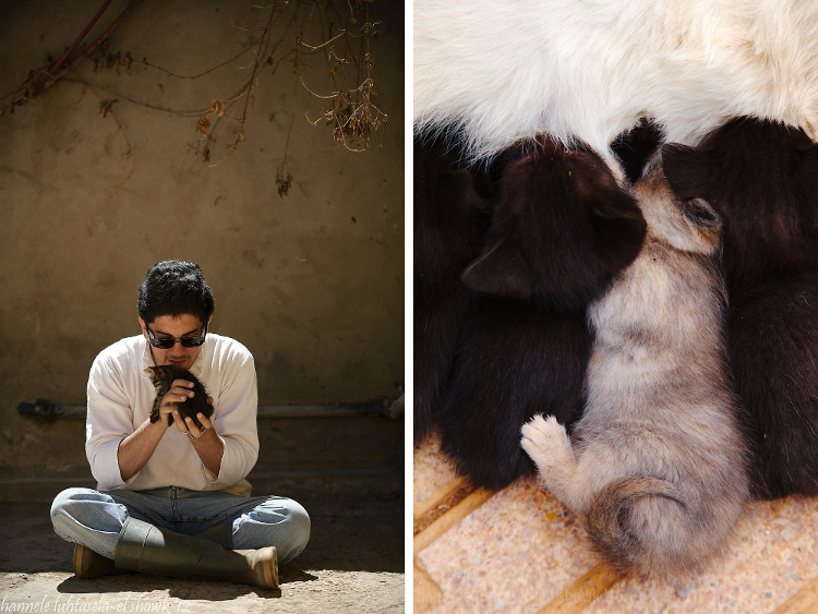 Affection between humans and pets. Tips on How to Capture Affection in Your Photographs