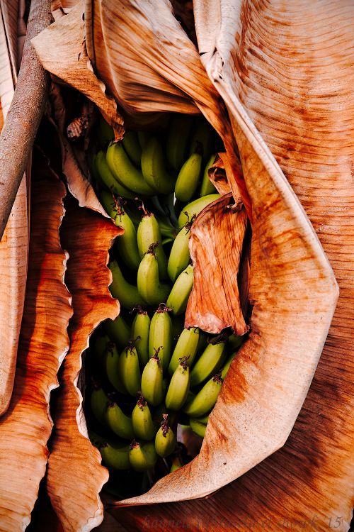 banana leaves and fruit - How to Use Conceptual Contrast in Photography