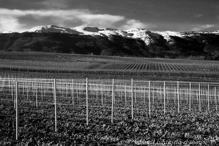 rows of sticks for vines and mountains - How to Use Conceptual Contrast in Photography