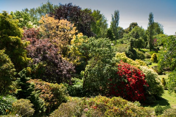 garden with a red bush - 9 Ways to Create Balance in Your Photography