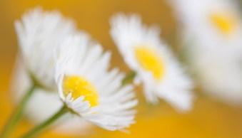 flower photography macro handheld