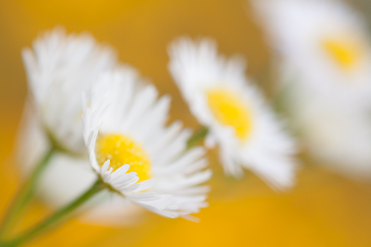 white flowers - A Beginner's Guide to Photographing Flowers