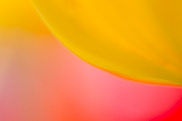 tulip flower photography abstract macro - A Beginner's Guide to Photographing Flowers