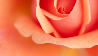 Guide to Choosing Subjects and Compositions for Flower Photography