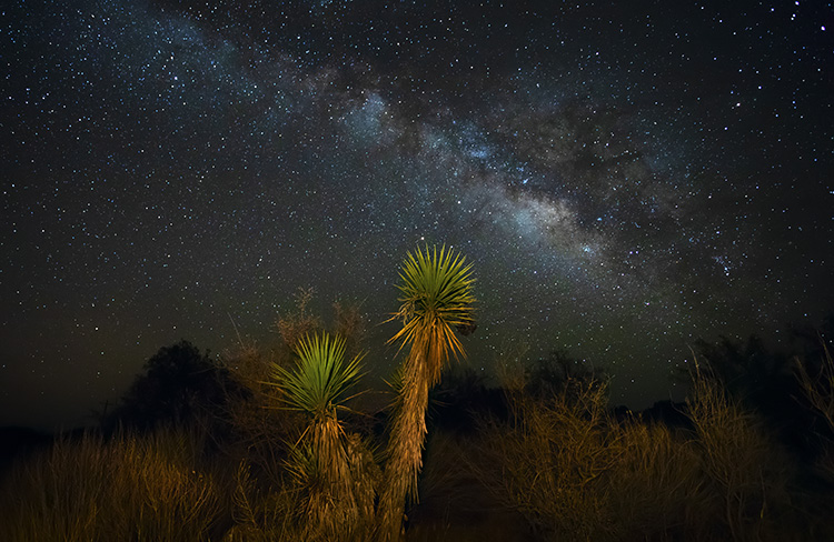 desert trees and Milky Way - How to Choose a Lens for Night Sky Photography