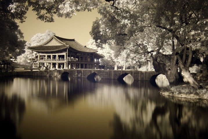 black and white infrared-style image