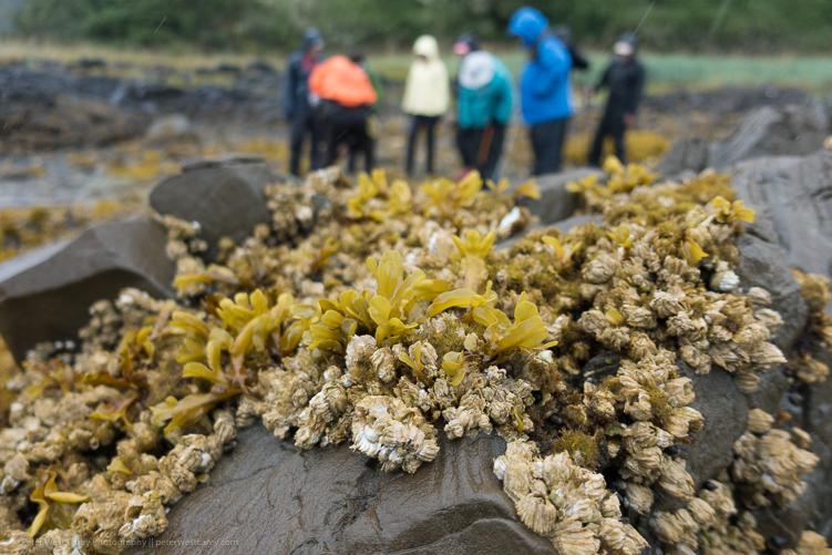Image: Tide Flats – Alaska, USA ISO 125, f/18, 1/400th.