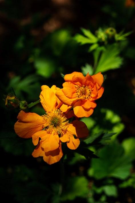 光之花 -  8种创造更多戏剧性花卉照片的方法
