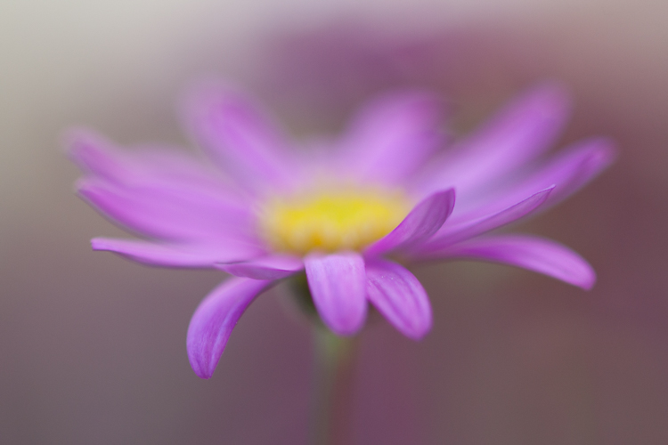 flower photography macro abstract