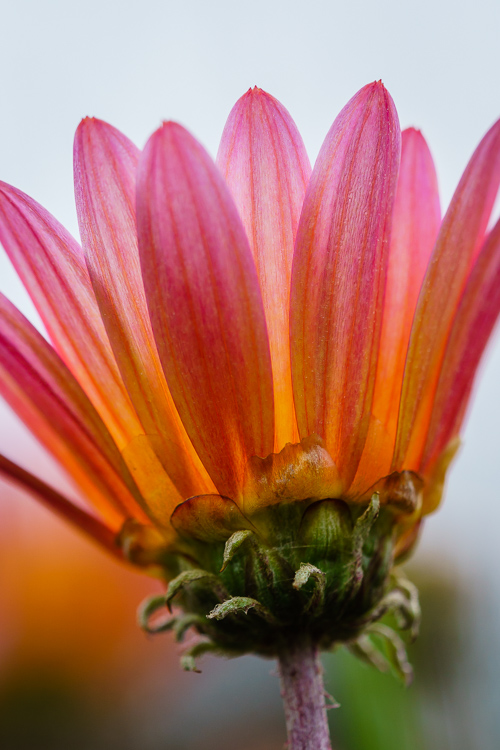 Looking Up flower - 8 Ways to Create More Dramatic Flower Photos
