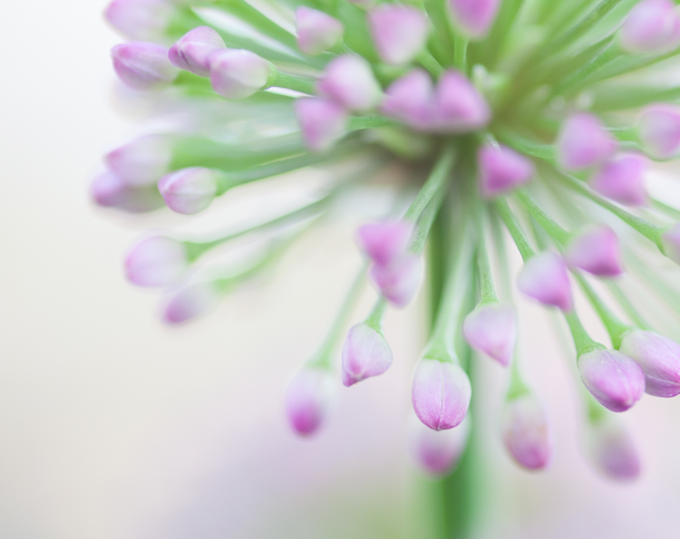 flower abstract - Common Macro Photography Mistakes